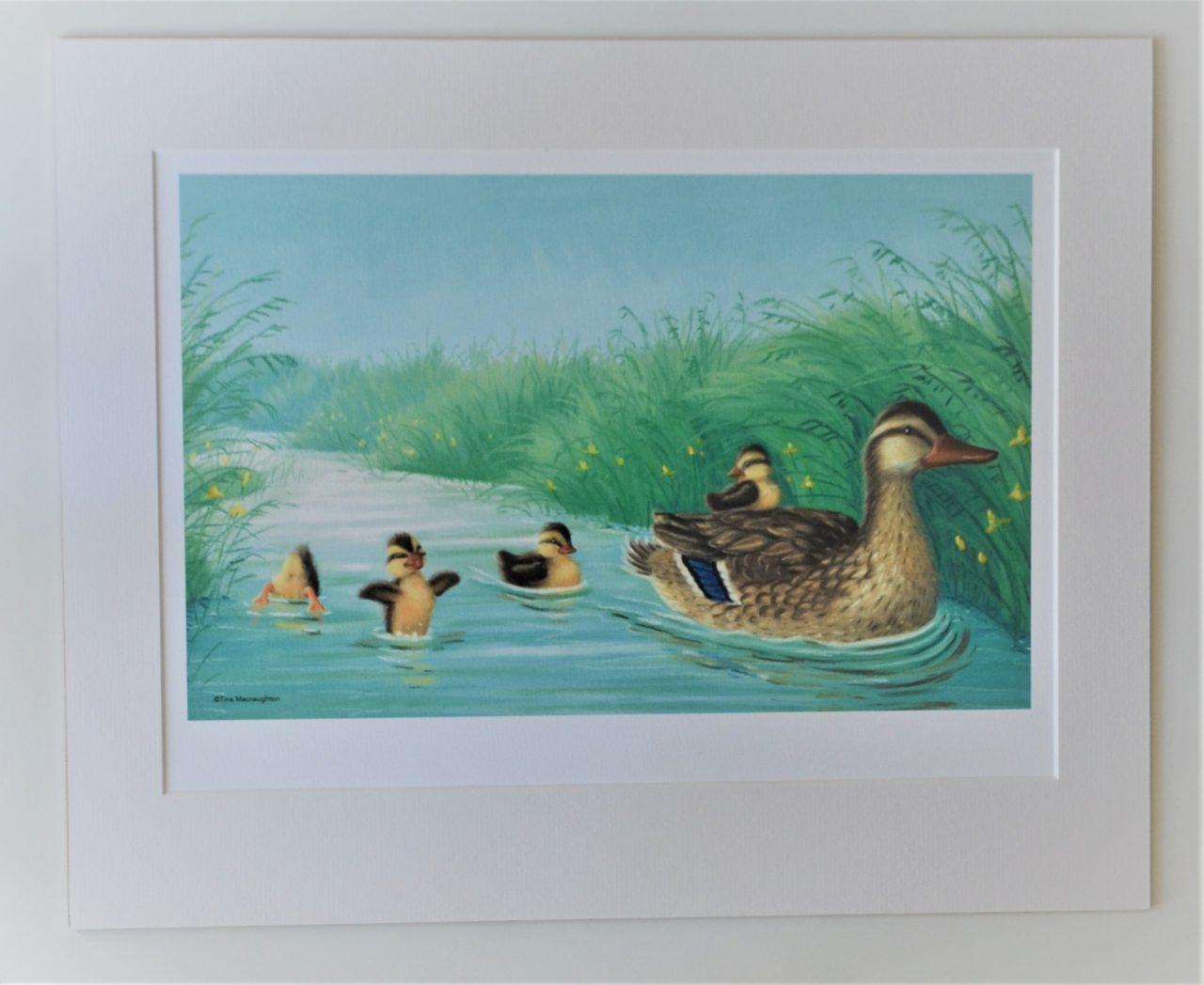 Mallard Duck and four Ducklings by Tina Macnaughton.