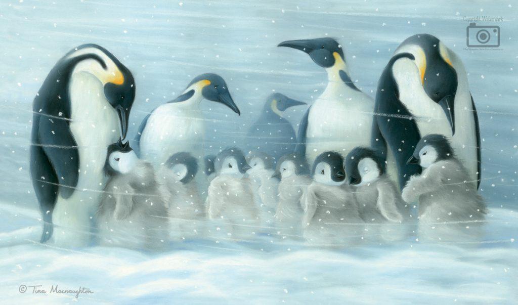 Where Snowflakes Fall illustrated by Tina Macnaughton.
