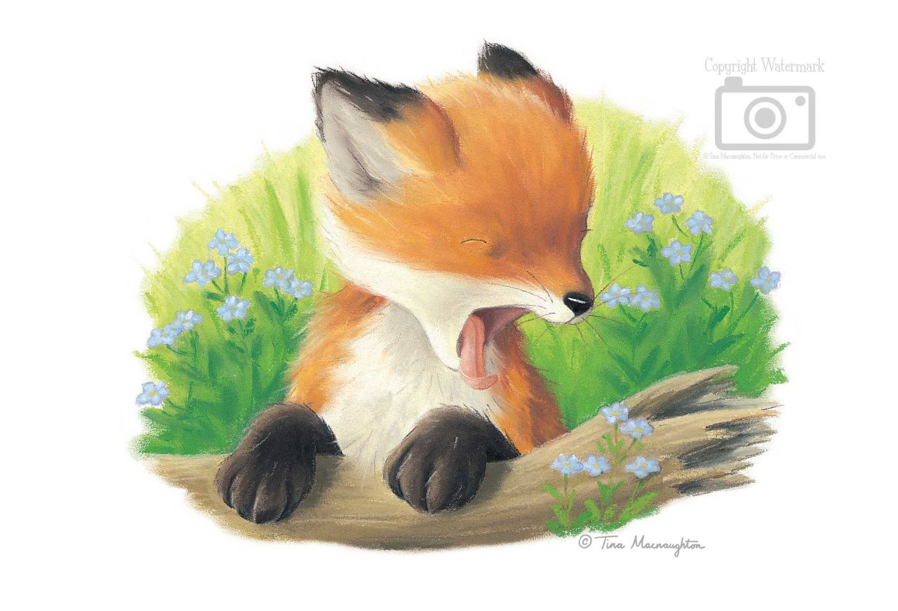 Time for Bed, Little One illustrated by Tina Macnaughton.